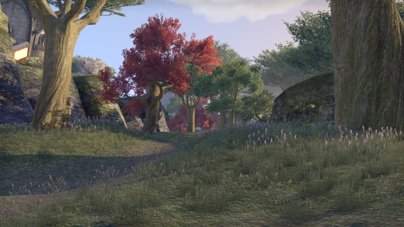 The woods of Auridon in Elder Scrolls Online
