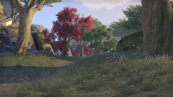 The woods of Auridon in Elder Scrolls Online