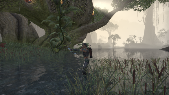 My Bosmer sorcerer hunts through Grahtwood in Elder Scrolls Online