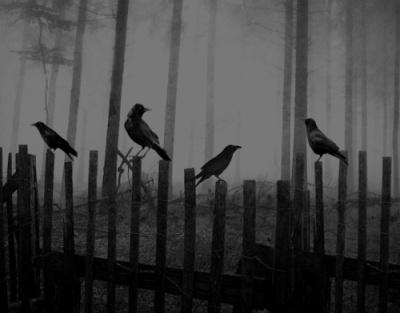 Not ravens, but close enough