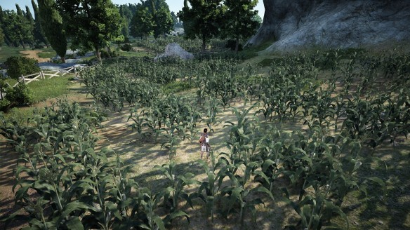 A corn field in Black Desert