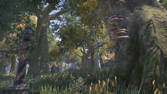The Glenumbra zone in Elder Scrolls Online.